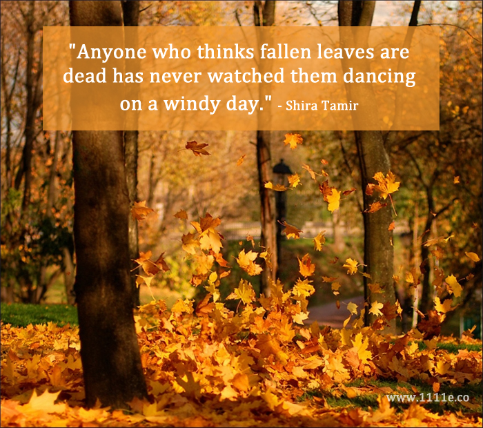 Delicieux The Dance Of The Fallen Leaves   Autumn Quote 11:11