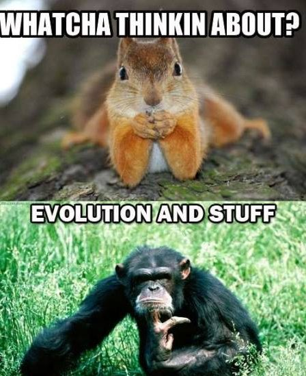 evolution and stuff