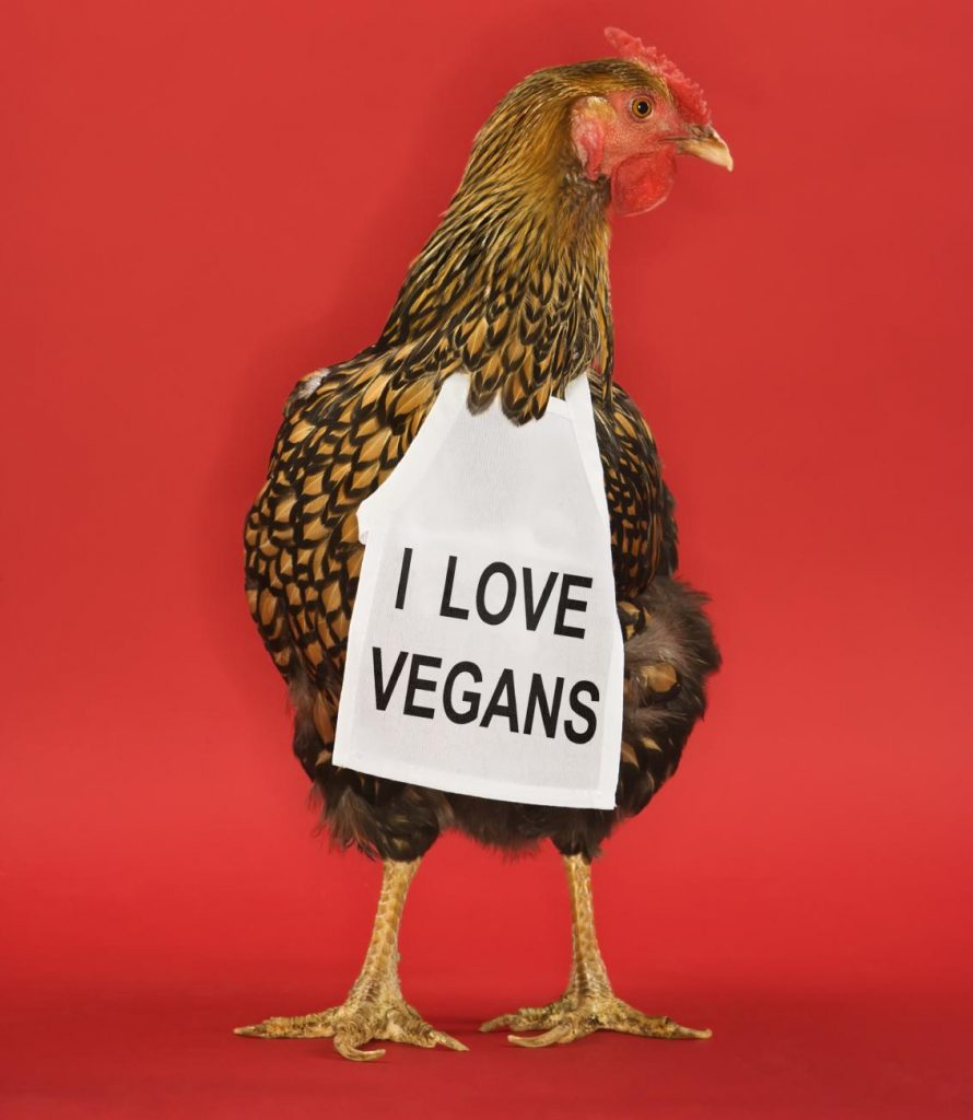 i love vegans chicken apron