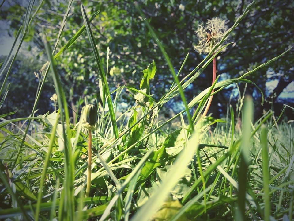 Even a blade of grass